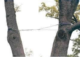 стяжка деревьев