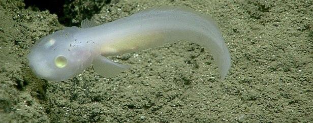 Подводны обитатели