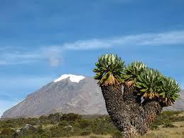 kilimanjaro-5