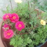 Цветочный рай на отдельно взятой территории