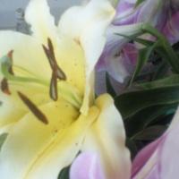 Лилия - удивительно нежный и грациозный цветок